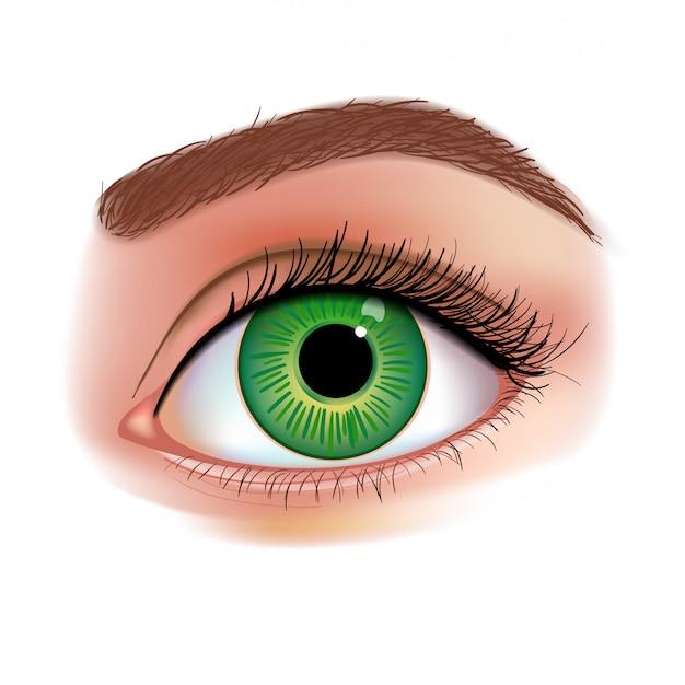 女性の目のリアルなイラスト
