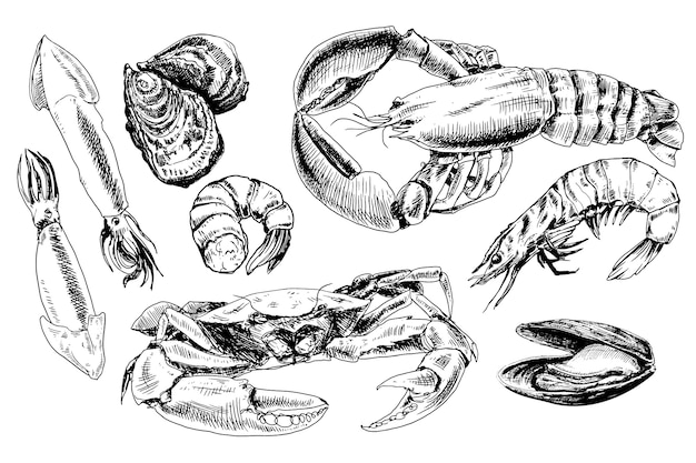 Морепродукты рисованной коллекции