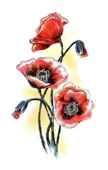 Маки цветы