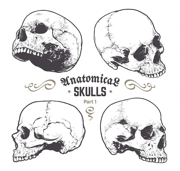 手描きの頭蓋骨のセット