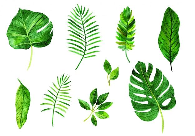Установить листья
