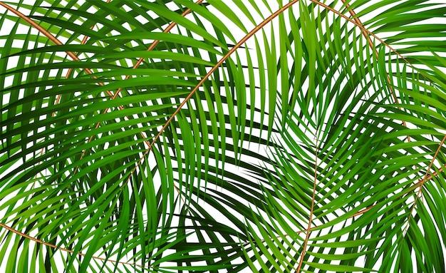 ヤシの葉のベクトルの背景イラスト