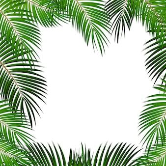 あなたのテキストのための場所で白い背景にヤシの葉