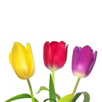 チューリップと花の背景