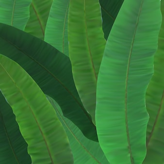美しい天然木ヤシの木の葉のクローズアップベクトルイラスト