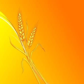 オレンジの背景に小麦の耳。