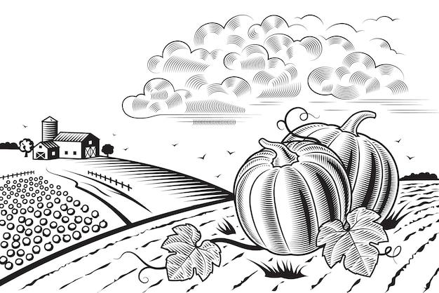 Урожай тыквы пейзаж черный и белый
