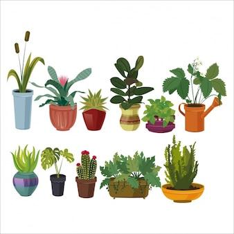 色とりどりのコレクションを植木鉢
