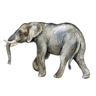 アフリカ象の水彩画