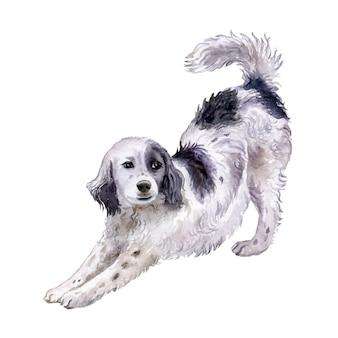 Собака английский сеттер в акварели