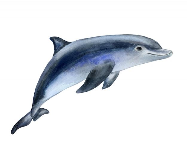 水彩でイルカ