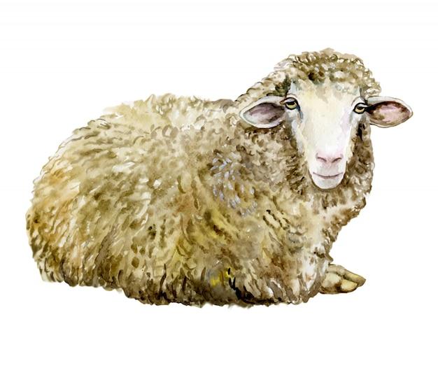 水彩画の羊