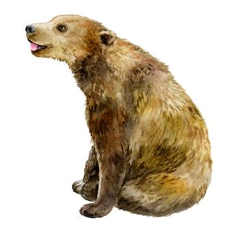 Медведь в акварели