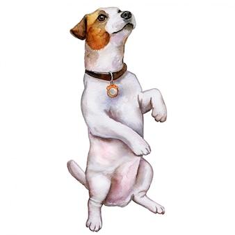 犬ジャックラッセル