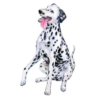 水彩でダルメシアン犬