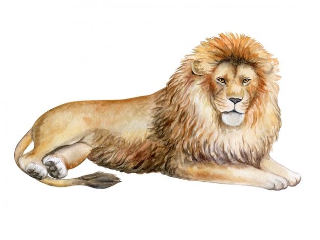 水彩のライオン