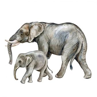 赤ちゃんとアフリカゾウ。家族。水彩