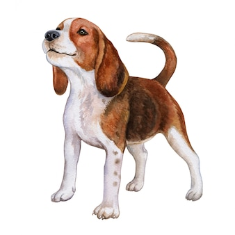 Собака бигль. акварель