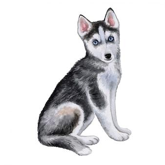 ハスキー犬の子犬。水彩