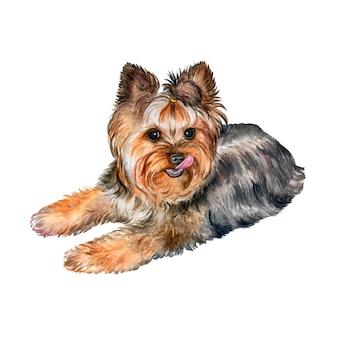 Собака йоркширский терьер акварель