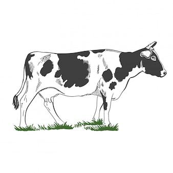 シルエット、緑の草、イラストに立っている角を持つ牛の図。