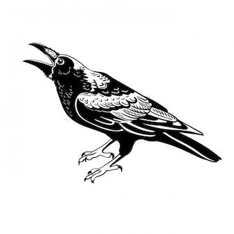 Ворона-птичка, изолированная на белом фоне для талисмана или логотипа