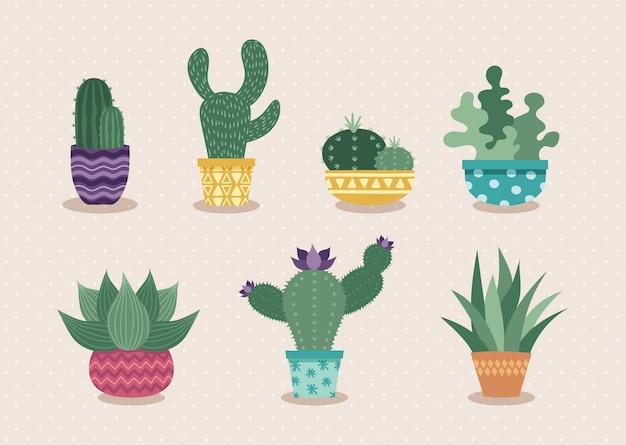 Набор кактусов