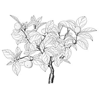 オレンジの木の手描きの画像。