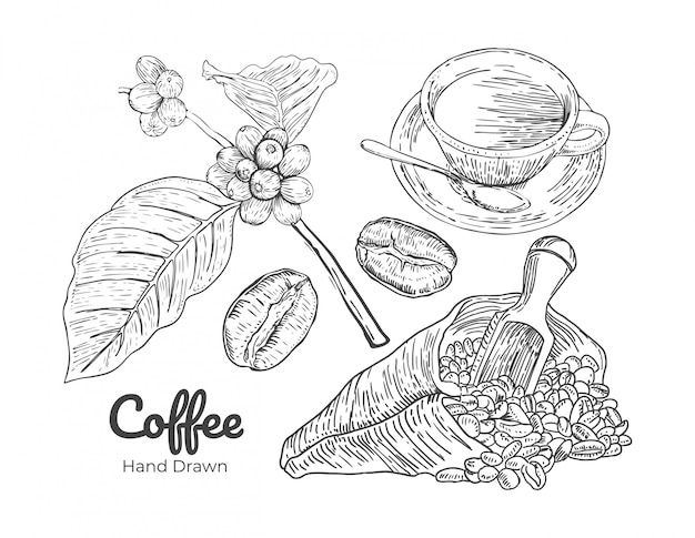 コーヒーの手描きのベクトル