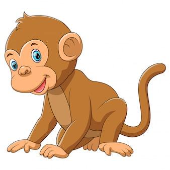 白い背景を持つかわいい猿