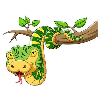 木の上の緑のヘビ