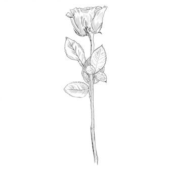 バラの手描きの彫刻スタイル