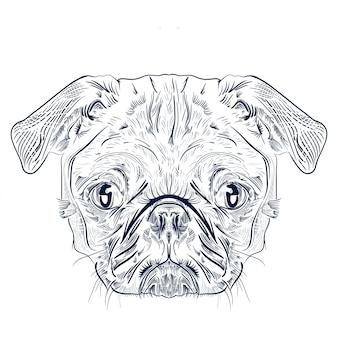 分離されたパグ犬の頭のアンティーク彫刻図面