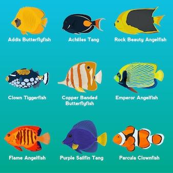 色とりどりの魚のコレクション