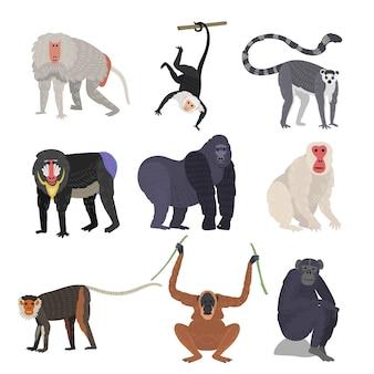 Разные виды обезьян редких животных установлены.