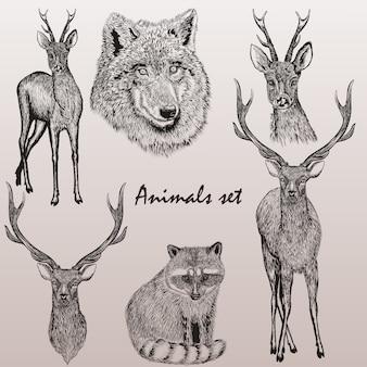 Набор рисованной лесных животных