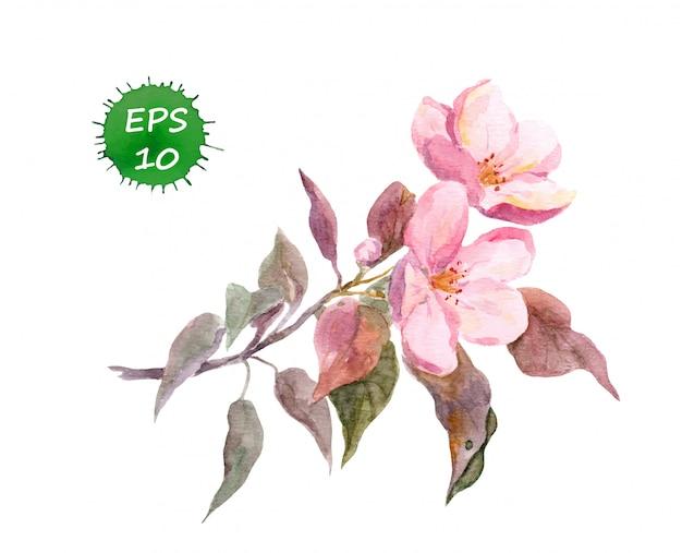 Цветок розовой яблони.