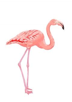 ピンクのフラミンゴの鳥。