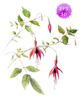 フクシアピンクの花-水彩