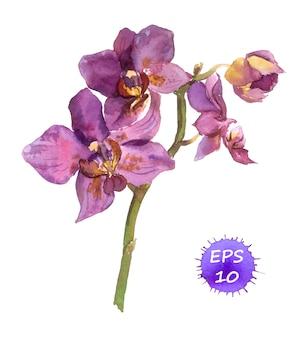 Акварель нарисованная орхидея
