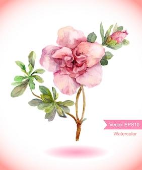 水彩のピンクのカメリアの花