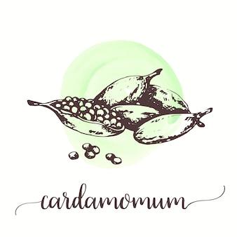 カルダモンは果実に種子を与えます。