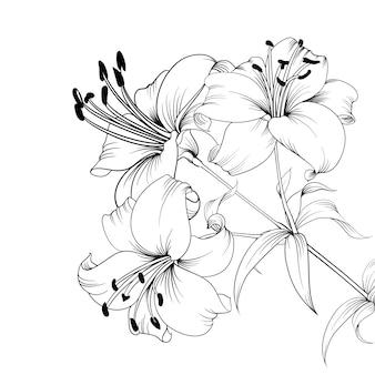 Цветущая лилия.