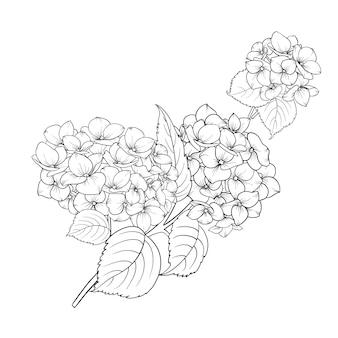 咲く花のアジサイ。