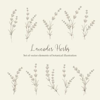 ラベンダーの花の要素のセット。