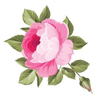 葉とピンクのバラ