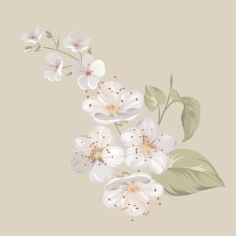 白い桜の花。
