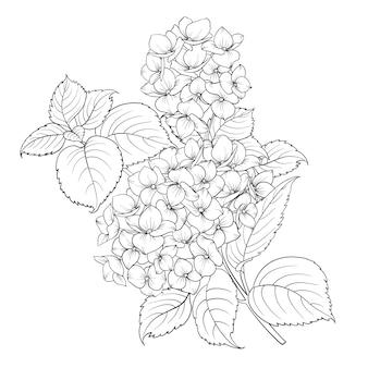 白で分離されたアジサイの花のモップヘッド。