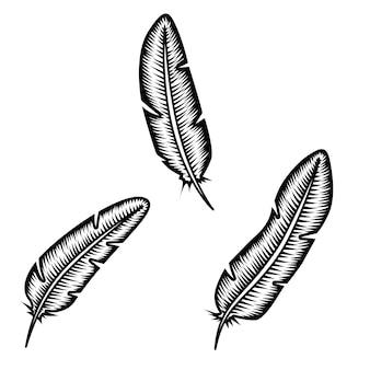 白い背景の上の羽のセット。ポスター、カード、エンブレム、ロゴの要素。図