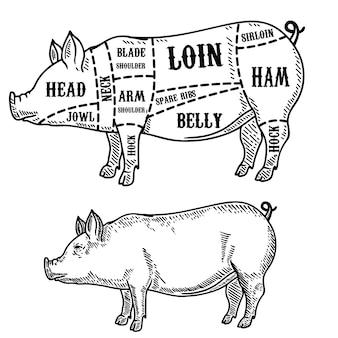豚肉屋の図。ポークカット。ポスター、カード、エンブレム、バッジの要素。画像